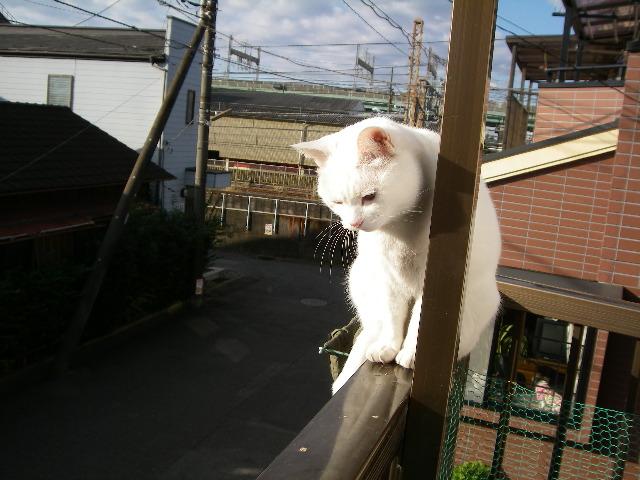 ばあちやんネコが遊びにきました。_d0116059_21112781.jpg