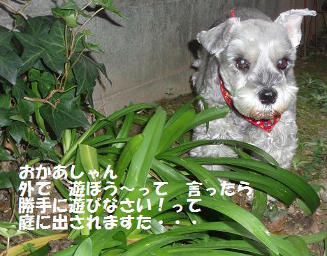 c0098501_16472359.jpg