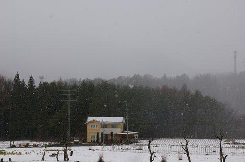 ***雪が降ってきたから***_c0127703_1630611.jpg