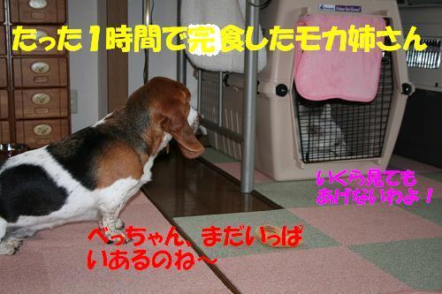f0121712_11532363.jpg
