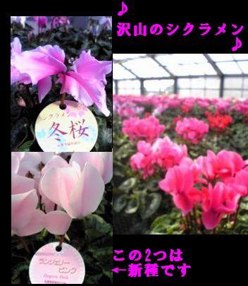 b0085815_8451966.jpg