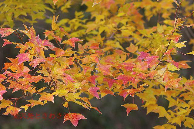 柿の木と秋の空_d0043136_2217439.jpg