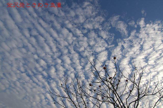 柿の木と秋の空_d0043136_2219396.jpg