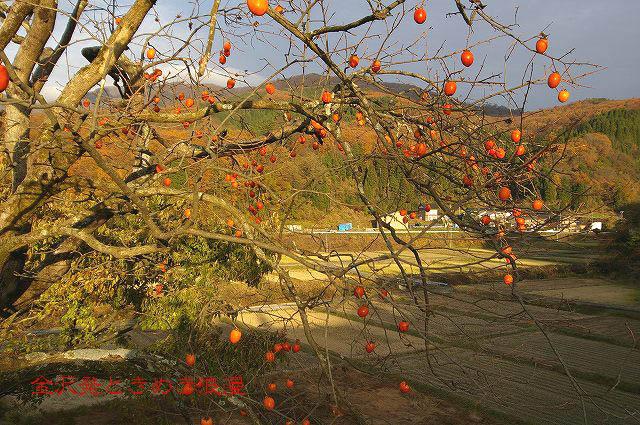 柿の木と秋の空_d0043136_22201553.jpg