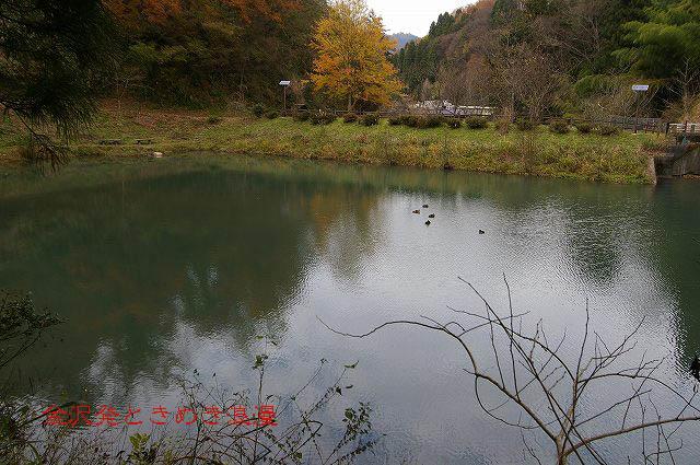 柿の木と秋の空_d0043136_22204879.jpg