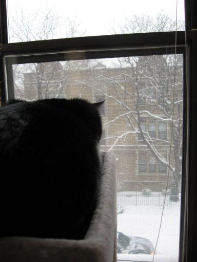 雪の当たり年?_e0101819_1365298.jpg