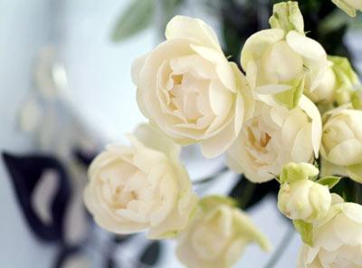 薔薇ー愛の花_f0070743_20532458.jpg