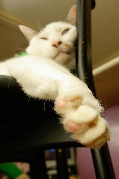 猫の手も借りたい・・・_a0028451_10395890.jpg