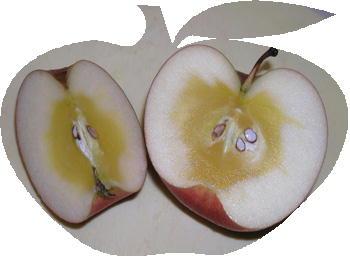 蜜りんご_c0151053_2365942.jpg