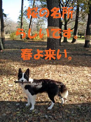 f0132070_022841.jpg