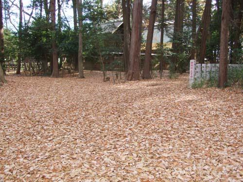 落ち葉の絨毯_d0130714_1513201.jpg