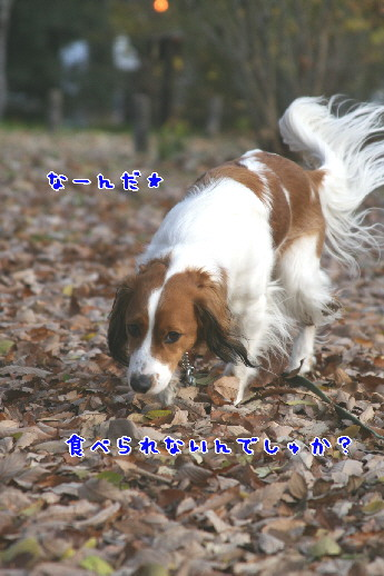d0013149_23145270.jpg