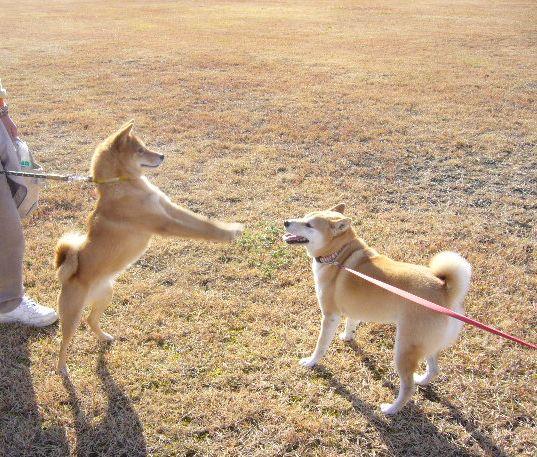 2007年12月16日(日)柴・柴・柴・柴犬の日!_f0060461_19521094.jpg