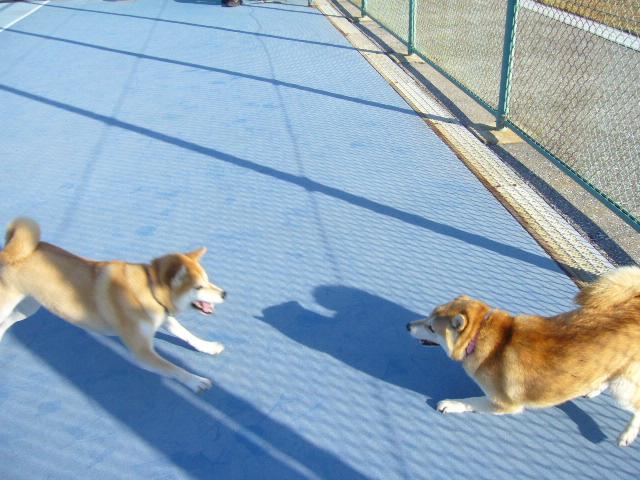 2007年12月16日(日)柴・柴・柴・柴犬の日!_f0060461_2015522.jpg