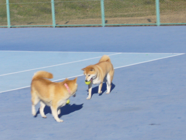 2007年12月16日(日)柴・柴・柴・柴犬の日!_f0060461_20263411.jpg