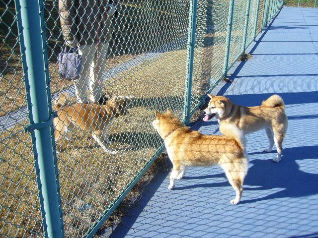 2007年12月16日(日)柴・柴・柴・柴犬の日!_f0060461_20341523.jpg