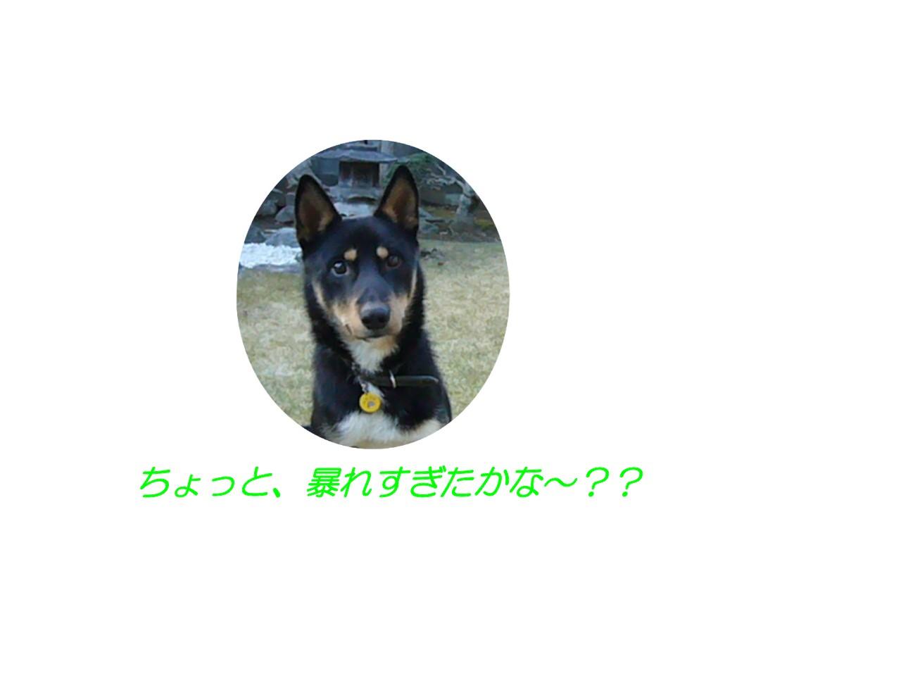 c0039376_19523520.jpg