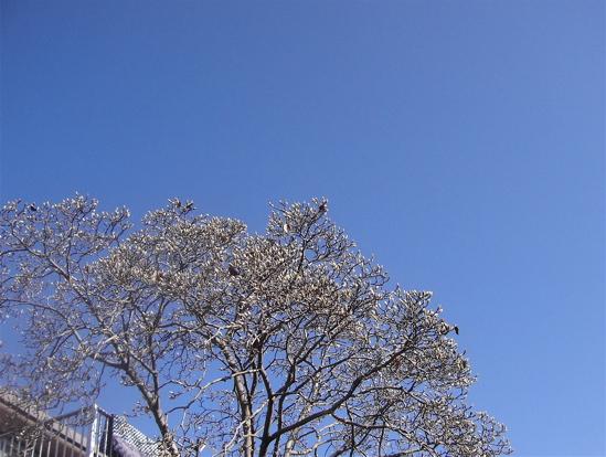 冬来たりなば 春遠からじ_a0061977_219539.jpg