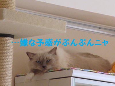 f0014893_212035.jpg