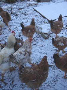 初雪が降りました_f0106597_0312688.jpg