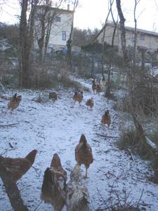 初雪が降りました_f0106597_0321363.jpg