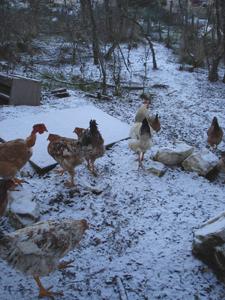 初雪が降りました_f0106597_0362895.jpg