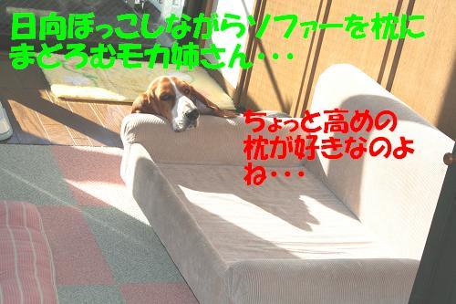 f0121712_2323318.jpg