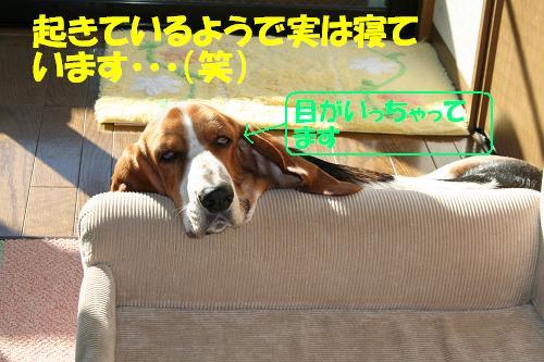 f0121712_2324170.jpg