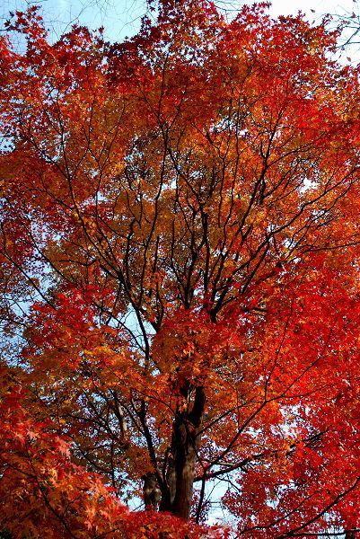 秋色いろいろ16 終焉の地_c0027027_23421946.jpg