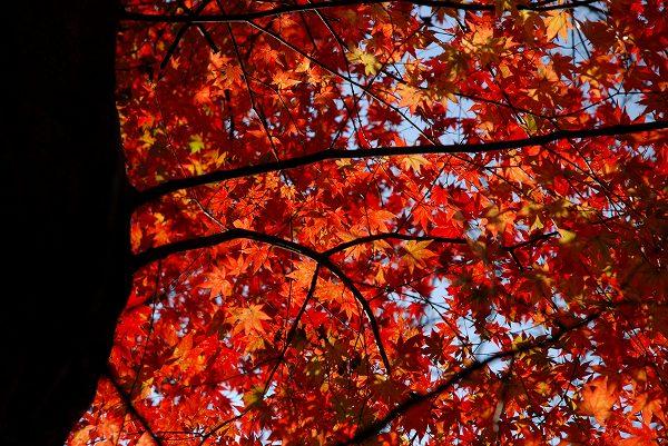 秋色いろいろ16 終焉の地_c0027027_23442097.jpg