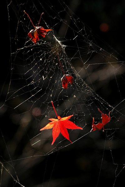 秋色いろいろ16 終焉の地_c0027027_23443232.jpg