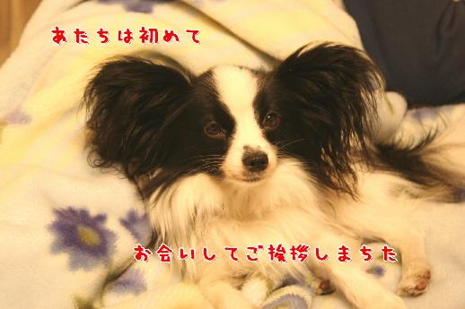 d0013149_23355868.jpg