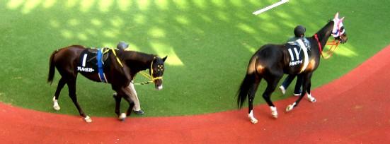 阪神競馬場           美しい馬に恍惚♪_c0009275_22264866.jpg