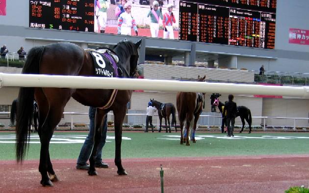 阪神競馬場           美しい馬に恍惚♪_c0009275_22282069.jpg