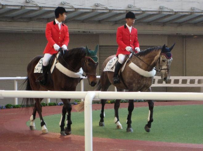 阪神競馬場           美しい馬に恍惚♪_c0009275_2228552.jpg