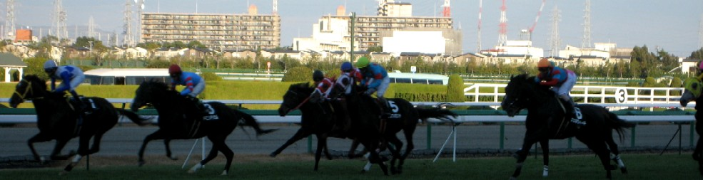 阪神競馬場           美しい馬に恍惚♪_c0009275_2230377.jpg
