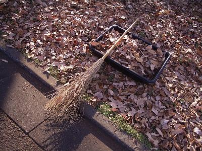 掃いても、掃いても…_c0124100_15204891.jpg