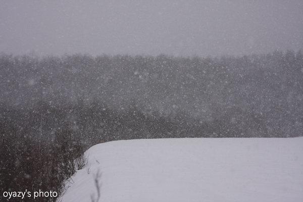 雪を切り撮る_a0071514_1938523.jpg
