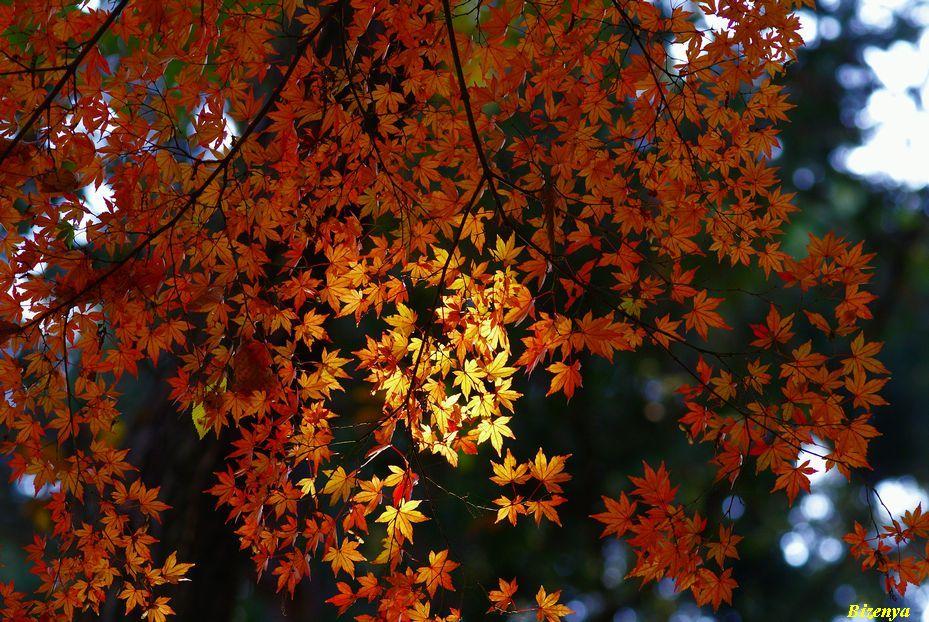 秋の思い出_d0086248_7422491.jpg