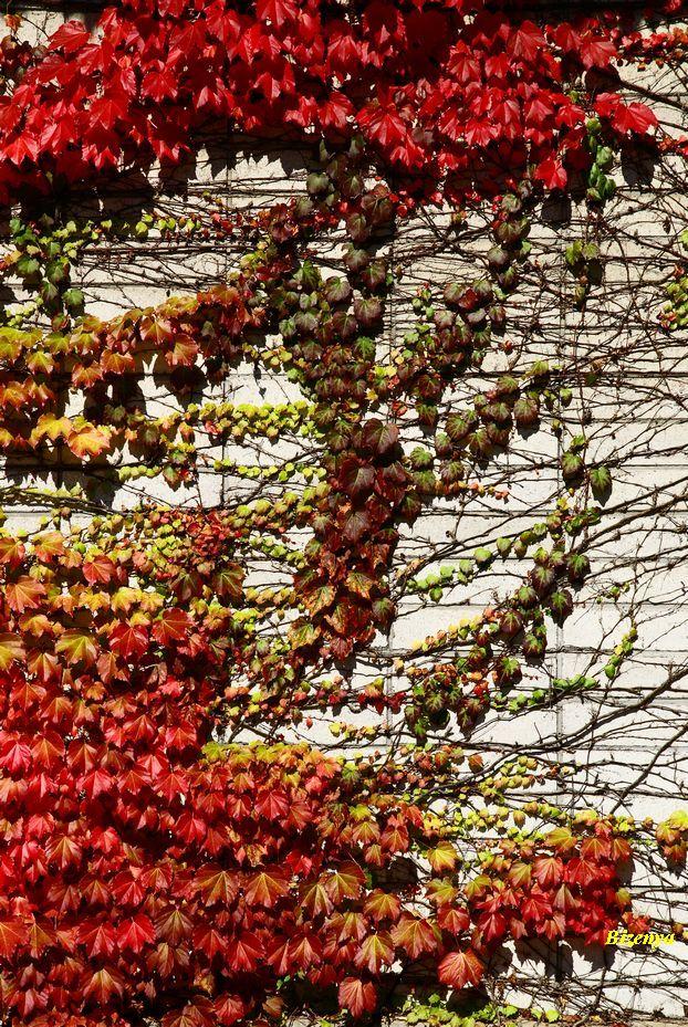 秋の思い出_d0086248_7425581.jpg