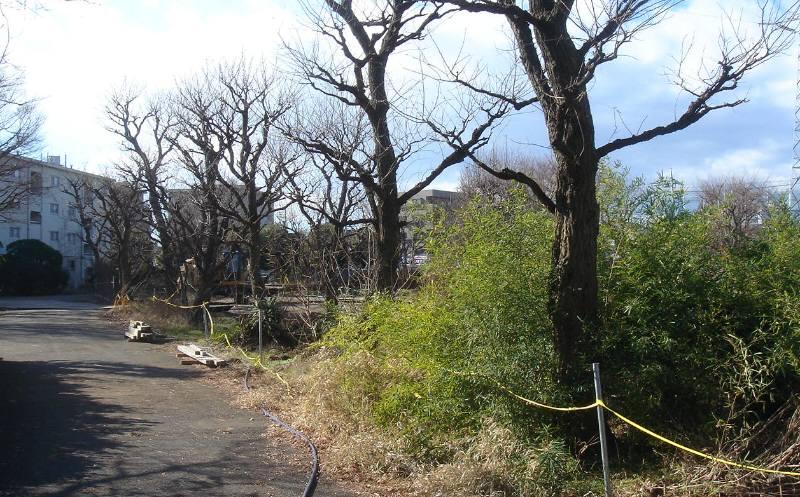 NTT花小金井東社宅跡地その後_f0059673_6111448.jpg