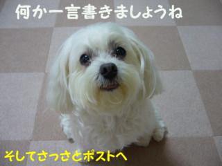 f0145192_15574163.jpg