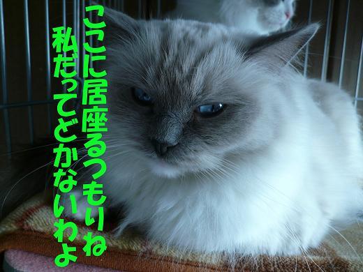 c0117597_0181337.jpg