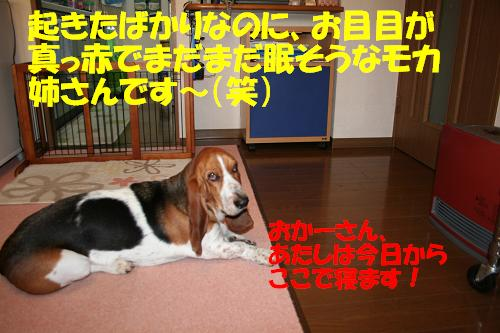 f0121712_10332970.jpg
