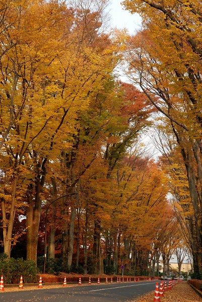 秋色いろいろ18 多摩御陵の紅葉_c0027027_0184414.jpg