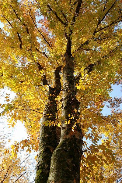 秋色いろいろ18 多摩御陵の紅葉_c0027027_019073.jpg
