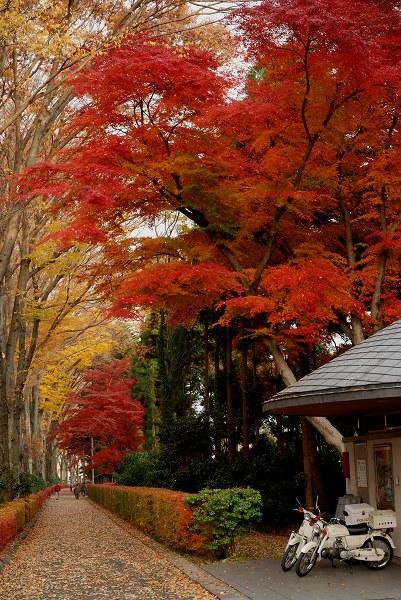秋色いろいろ18 多摩御陵の紅葉_c0027027_1422823.jpg