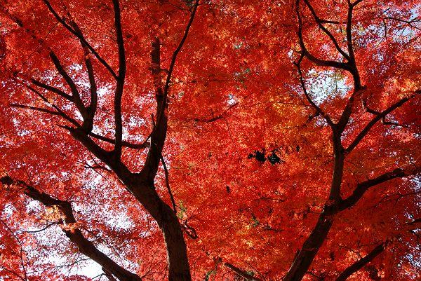 秋色いろいろ18 多摩御陵の紅葉_c0027027_1425518.jpg