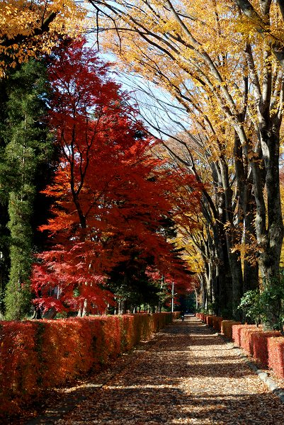 秋色いろいろ18 多摩御陵の紅葉_c0027027_142879.jpg