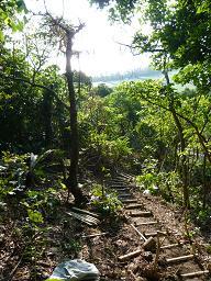 森のペイブメント(小道)作り_d0100638_212679.jpg